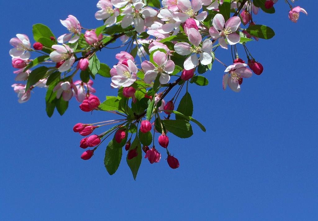 Sfondo desktop ramo fiori for Sfondi desktop fiori